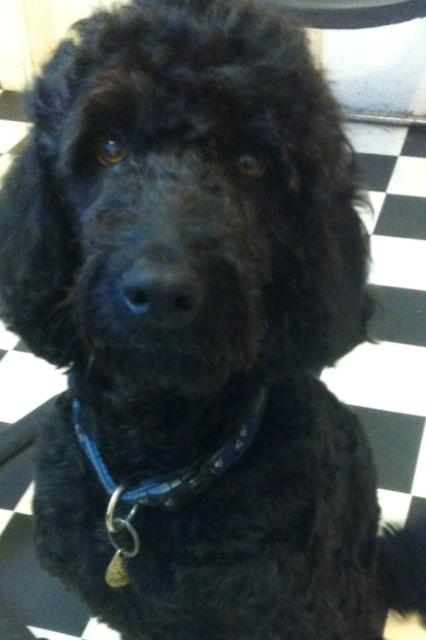 Dog Grooming Dunblane